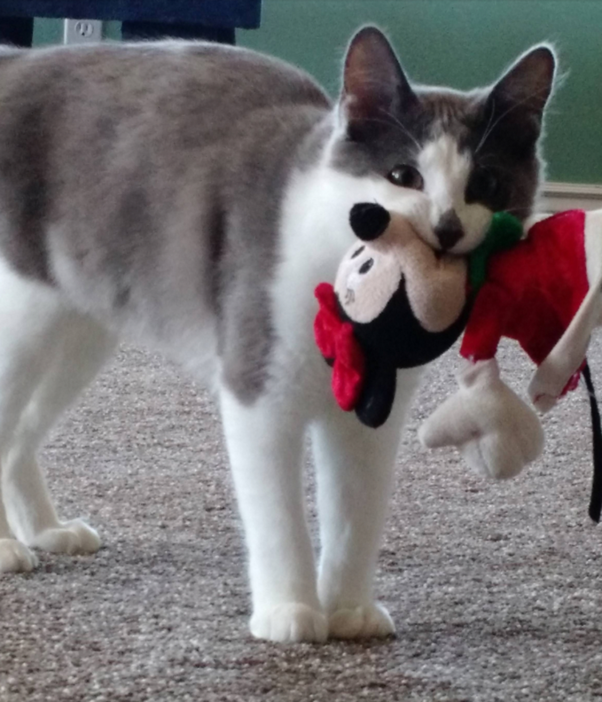 Кот хочет что-то тебе сказать