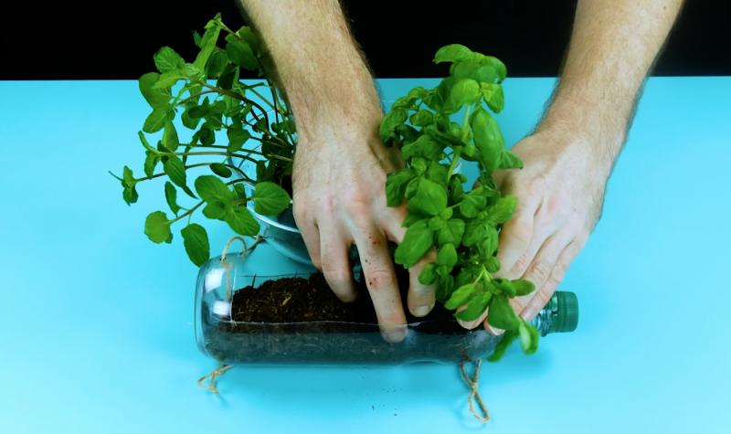 зелень высаживают в грунт