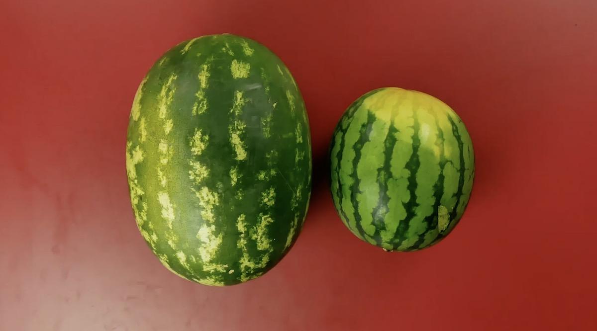 два арбуза