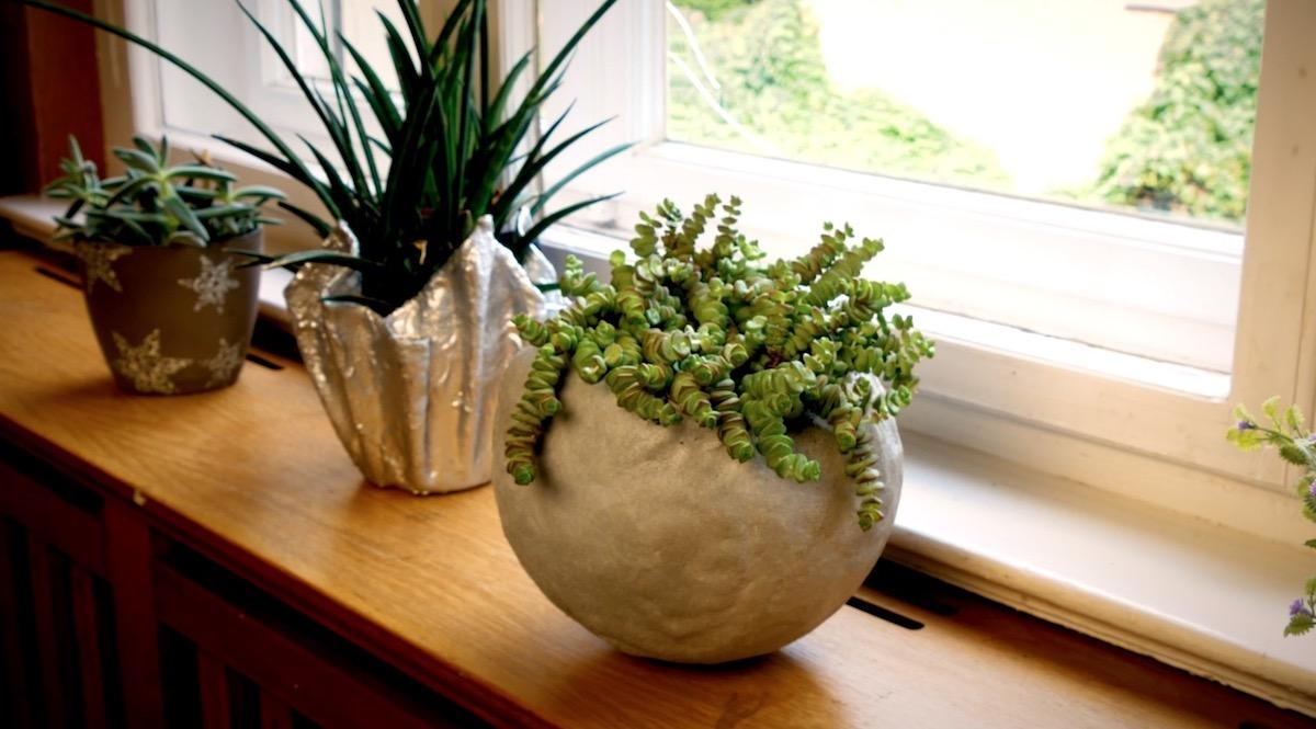 домашние растения на окне