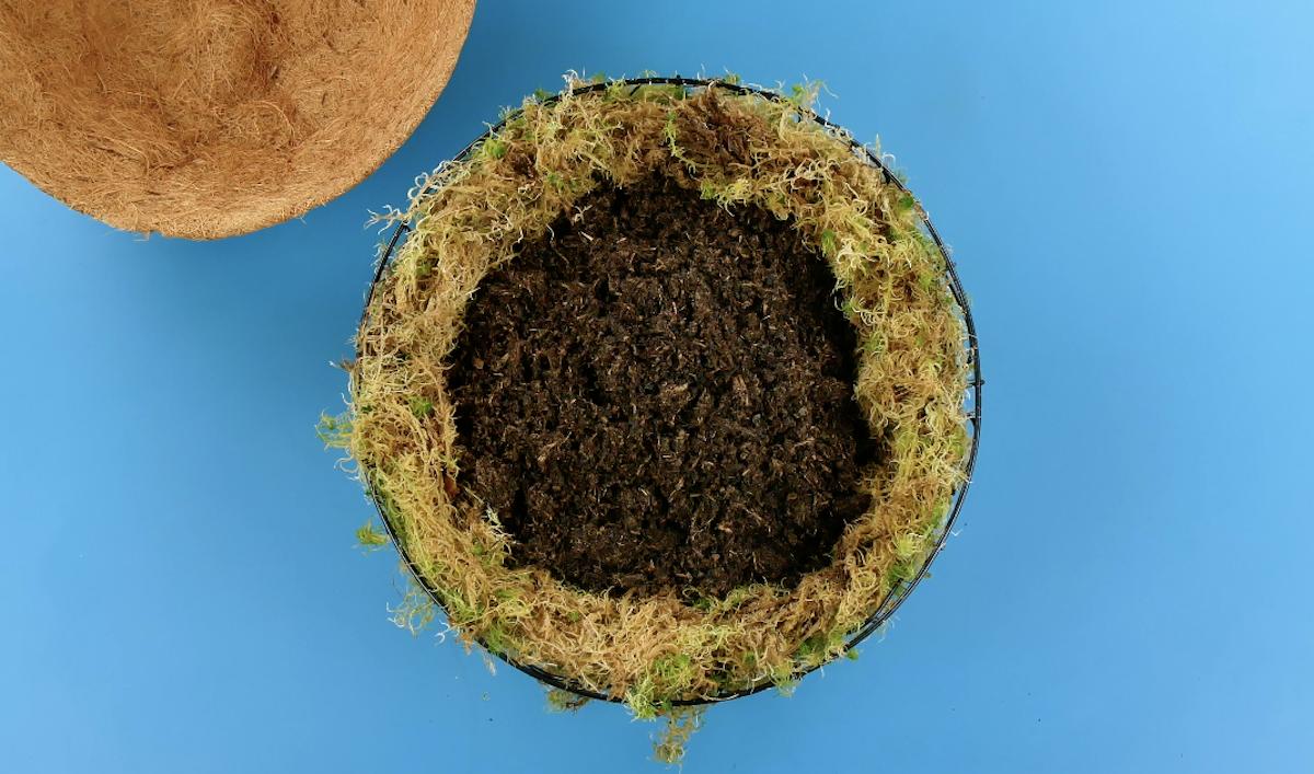 мох и грунт