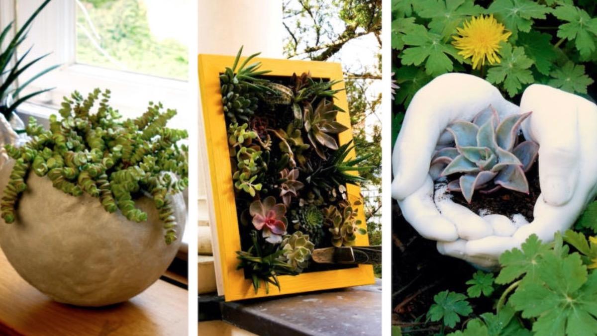 выращивать растения