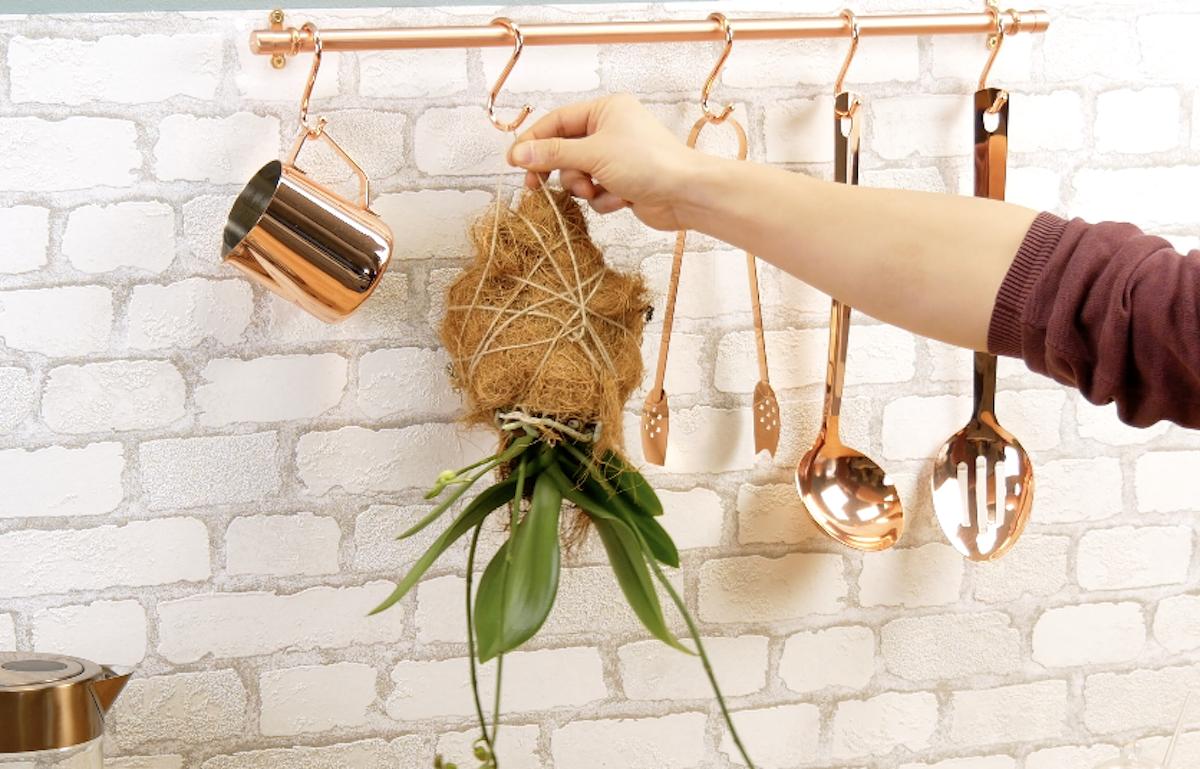 растение на кухне