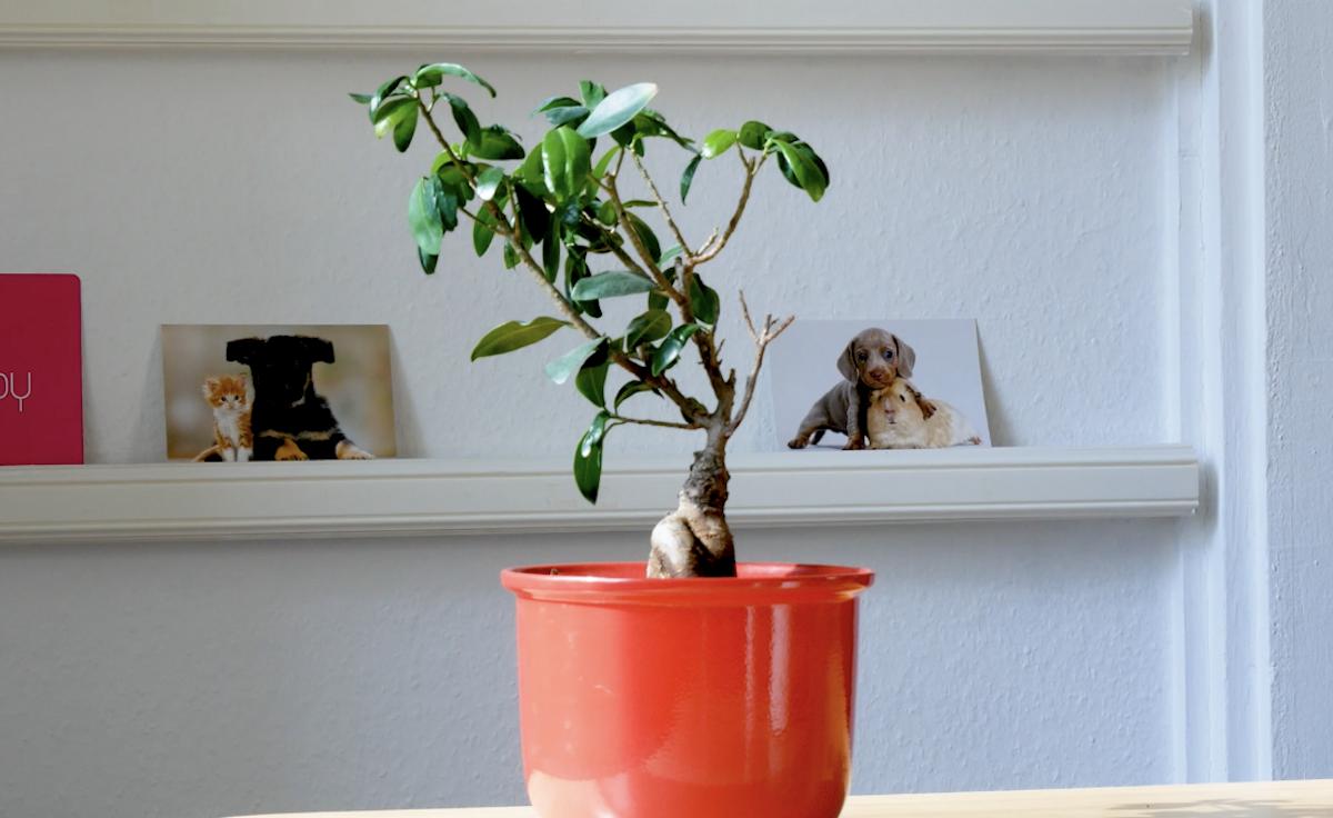 растение в цветочном горшке