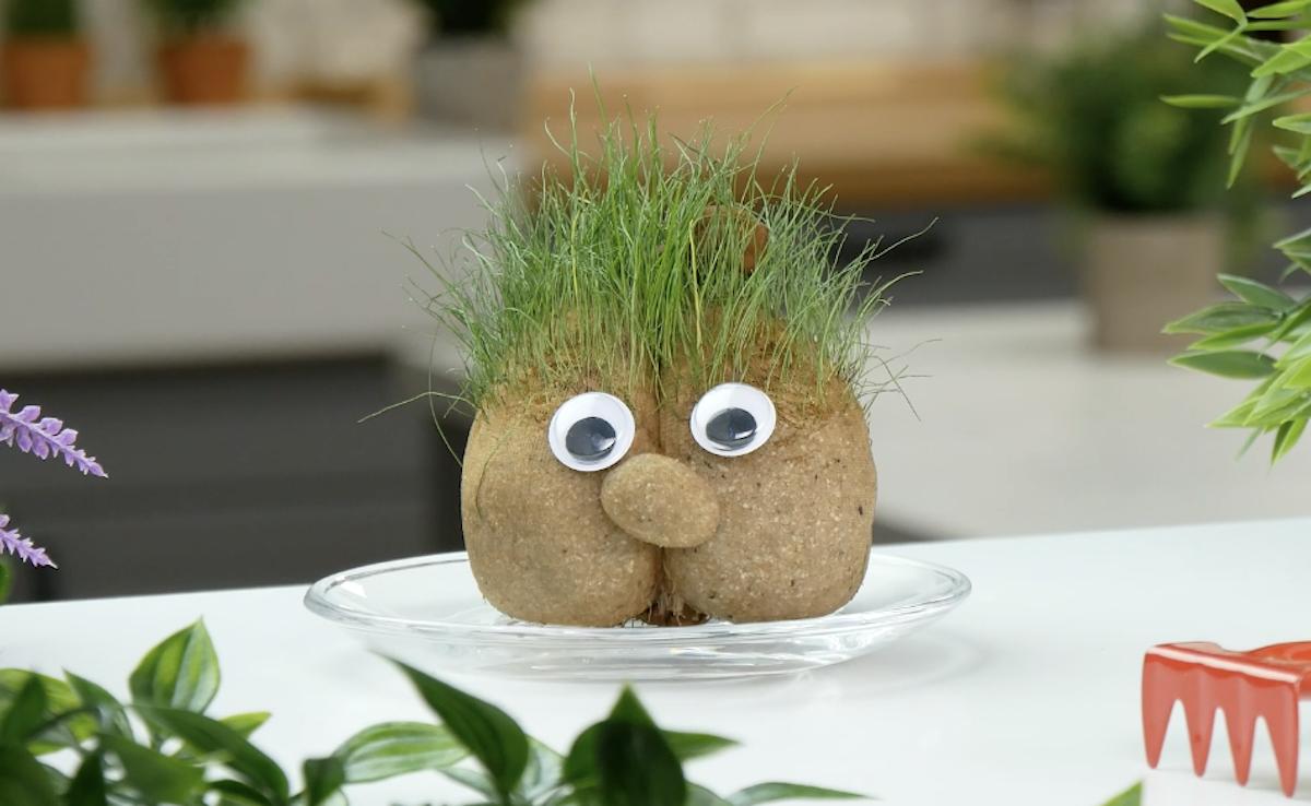 трава растет